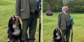 Puppy van Ierse president steelt de show tijdens interview