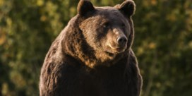 Heeft prins van Liechtenstein de grootste beer van Roemenië doodgeschoten?