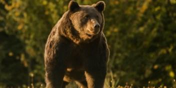 Prins van Liechtenstein schoot 'grootste beer van Europa' neer