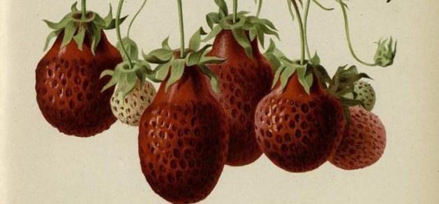 Smaakt fruit nog zo goed als vroeger?