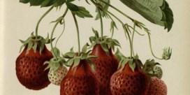 Smaakte fruit vroeger beter?