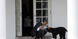 Familie-Obama rouwt om trouwe viervoeter Bo: 'We zullen hem missen'
