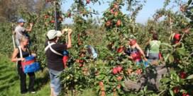 BelOrta investeert fors in nieuwe loodsen voor appelen en peren