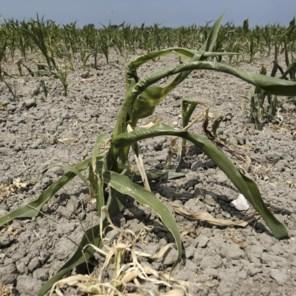 België bij zwaarst door droogte getroffen landen