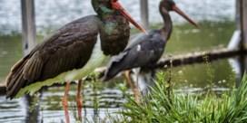 Vinden gevangen trekvogels de weg naar Afrika terug?