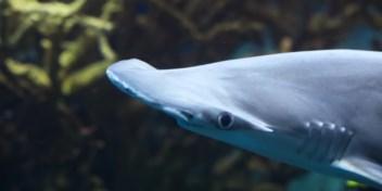 Ook haaien hebben een ingebouwde gps
