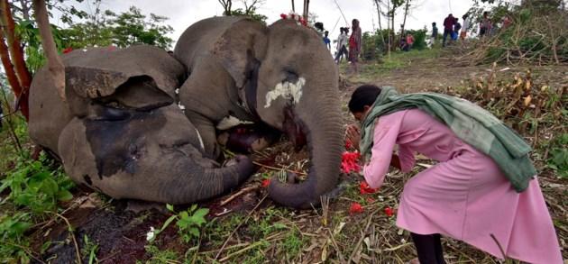 Kudde dode olifanten in India mogelijk gestorven door blikseminslag