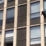 Kat springt van vierde verdieping uit brandend gebouw