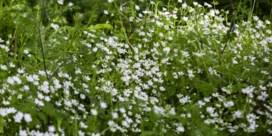 Na veel regen komt zonneschijn: de natuur bárst van vreugde