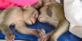 Thaise politie redt meer dan honderd aapjes van smokkelaars