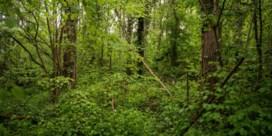 'Ruil gronden om natuur beter te laten aansluiten'