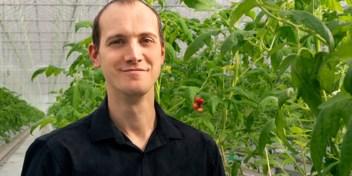 Deze duurzame tomaten komen uit België