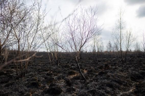 Demir stelt Defensie in gebreke voor natuurbrand Brecht