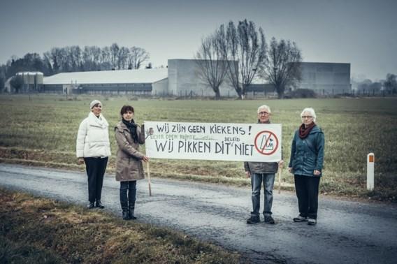 De Standaard wint Belfius-persprijs voor 'De veefabrieken'
