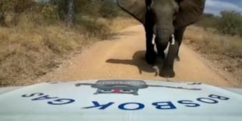 Dashcam filmt hoe Zuid-Afrikaanse olifant auto ramt