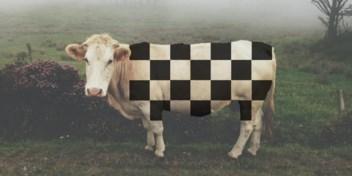 Wetenschapsvraag   Kun je koeien kweken met vierkante blokjes?