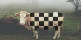 Kun je koeien kweken met vierkante blokjes?