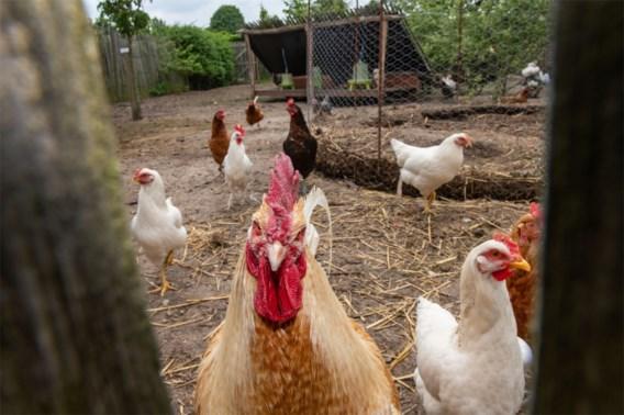 UAntwerpen: eet geen eieren in straal van vijftien kilometer rond 3M
