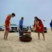 Badseizoen geopend met opvallende oproep: 'Heb respect voor de 1.400 kustredders'