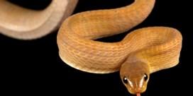 Zes nieuwe slangen, dankzij het reisverbod