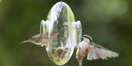 Is het goed om het hele jaar door vogels te voederen?