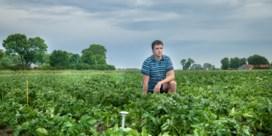 Drie meetdolken helpen de aardappeloogst vooruit