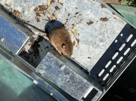 Australische gevangenis ontruimd wegens muizenplaag