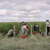Bordeauxwijn wordt hip, dankzij corona