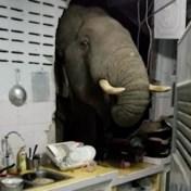 Olifant op zoek naar eten dringt keuken binnen in Thailand