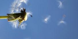 Hatsjie! Steeds meer pollenallergie