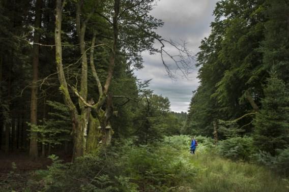 Wallonië wil twee nieuwe Nationale Parken creëren