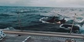 Dertig orka's beuken in op luxejacht in Straat van Gibraltar