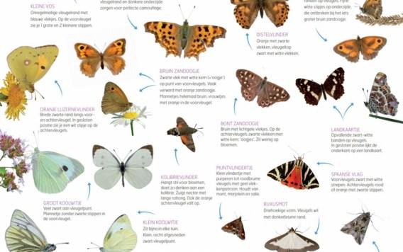 Natuurpunt start met Grote Vlindertelling