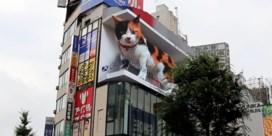 Tokio in de ban van reusachtige 3D-kat op reclamescherm
