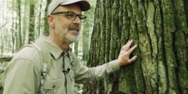 Als de bomen niet op Trump zouden stemmen
