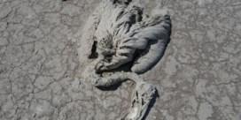 Opgedroogd zoutmeer ligt bezaaid met dode flamingokuikens