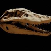 Opmerkelijk: zo'n 150 miljoen jaar oude 'grootvader van de krokodil' ontdekt