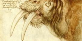 Expo | Albrecht Dürers legendarische reis door de Lage Landen