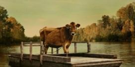 'First cow': een wel heel aparte western