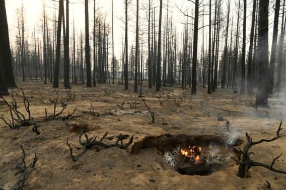 Bossen die uitstoot moesten compenseren in de as gelegd
