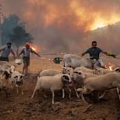Erdogan krijgt kritiek op aanpak bosbranden: 'Ons land zit in crisis'