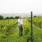Wijn uit West-Vlaanderen, dat vonden ze hier maar een bizar idee'