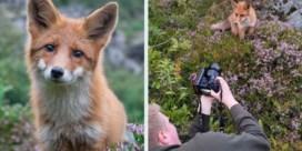 Fotograaf heeft bijzondere ontmoeting met vos