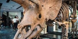 Te koop: triceratops
