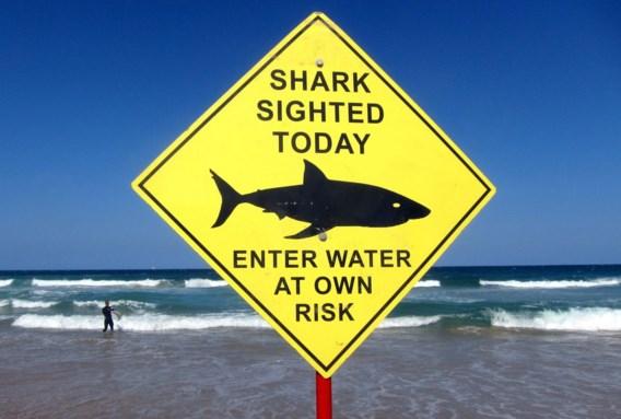Surfer overleden na aanval van haai in Australië