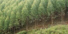 'Welke boom slorpt het meeste CO2 op?'