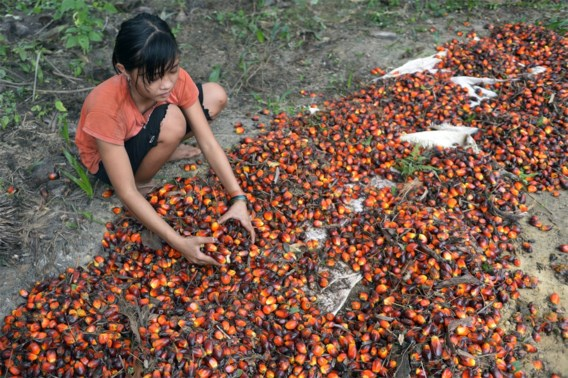 Rijden op soja- en palmolie stopt vanaf 2023
