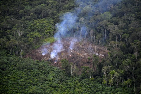 Recordaantal milieuactivisten vermoord in 2020