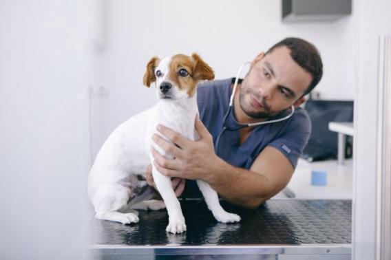 Geen antibiotica meer voor uw hond! Toch wel!