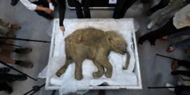 12,7 miljoen euro om wolharige mammoet weer tot leven te wekken